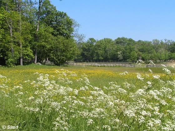 Sim1travels meadow Ängsö
