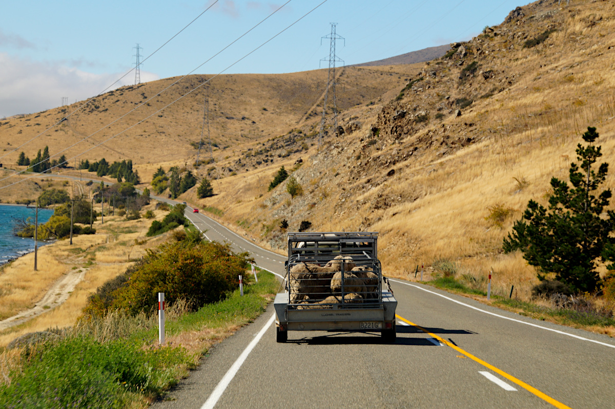 The road to Dunedin