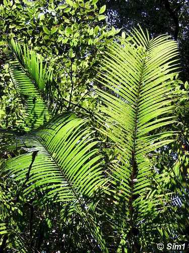 Bright sunlight, green leaves