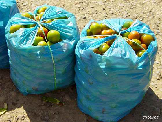 Fruit ready for transportation
