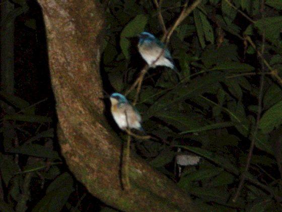 Night walk in the jungle