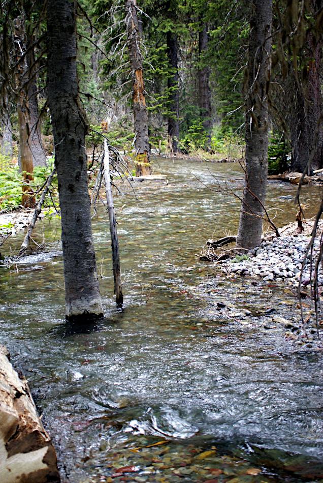 Cataract Creek, Glacier National Park