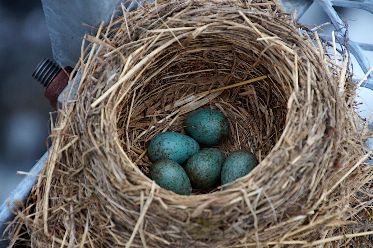Birds nest on the Suspension Bridge