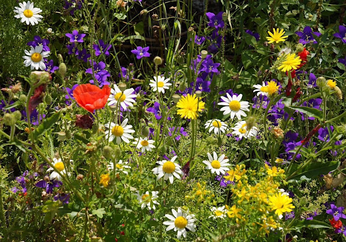 Wildflowers beside the hiking trail