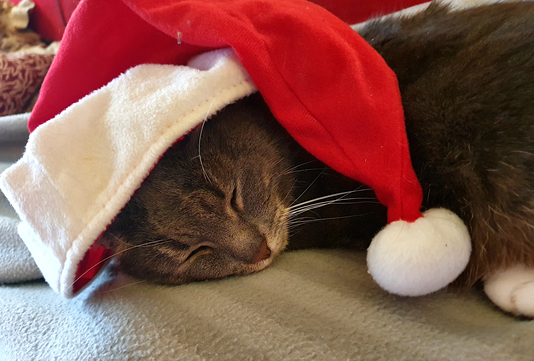 Our Christmas Cat