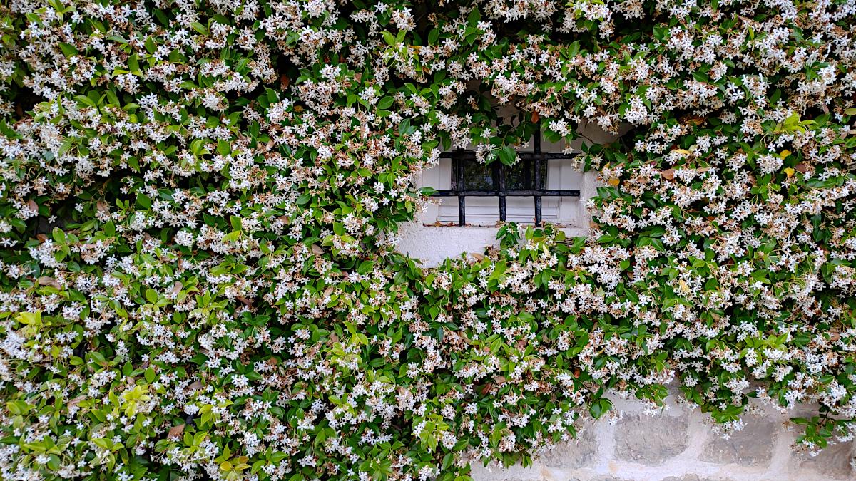 Window, Perast