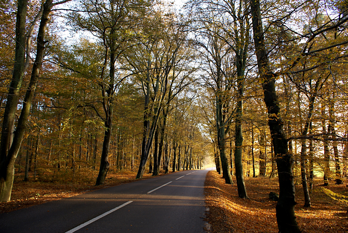 The road to Sundbyholm Slott in autumn