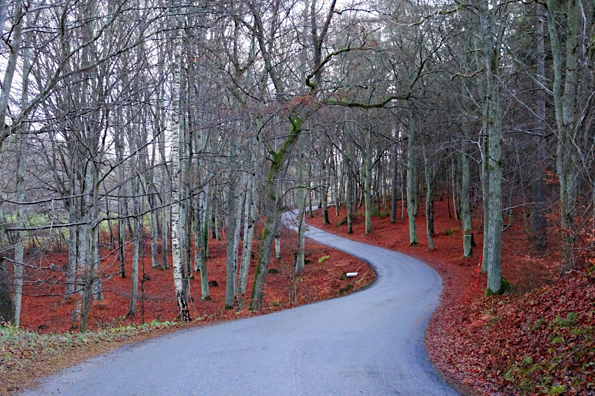 Europe's northernmost beech forests