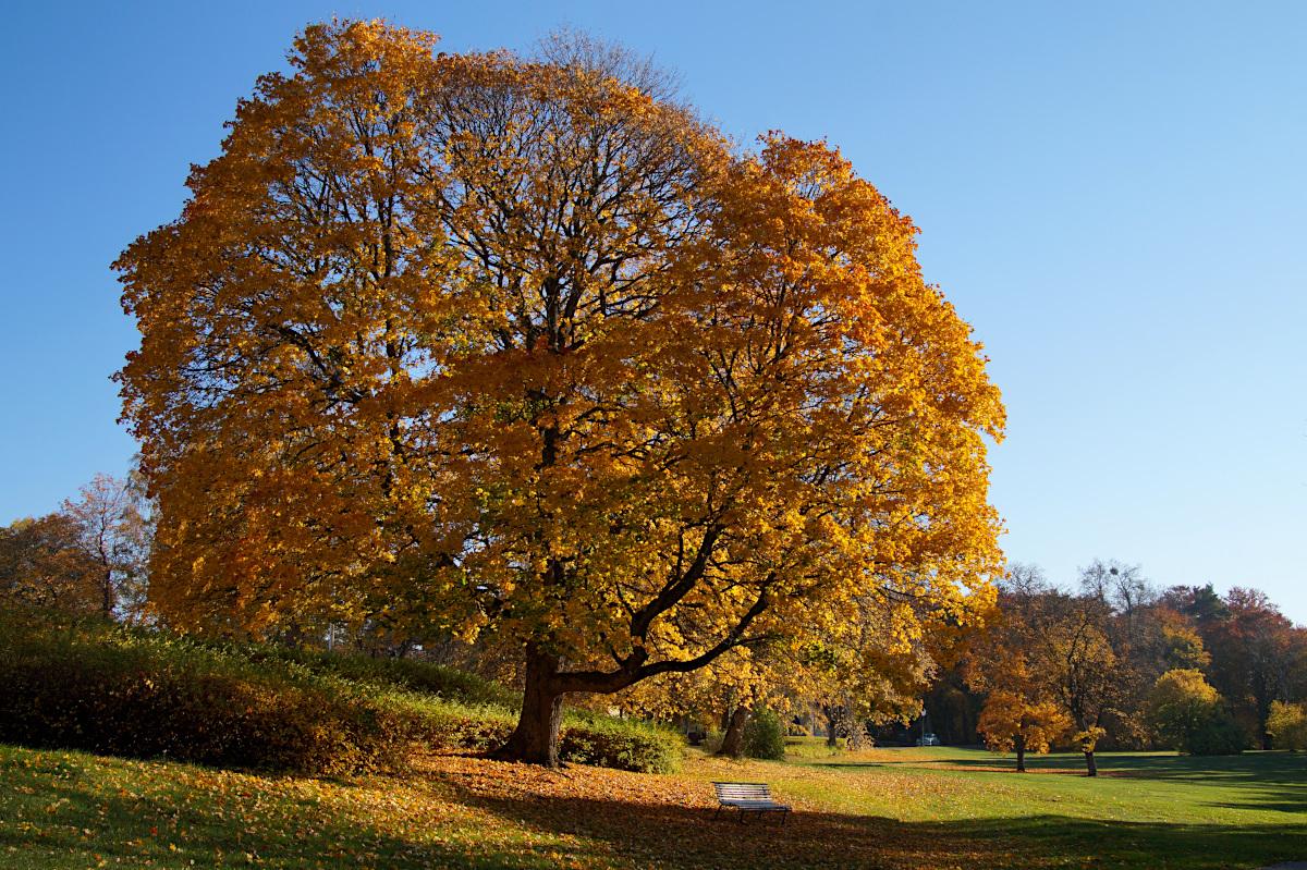 tree at Sundbyholm Slott