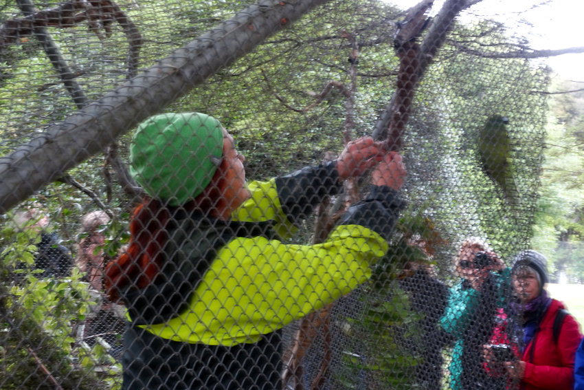 Te Anau Bird Sanctuary, guide in the aviary with the native parakeets