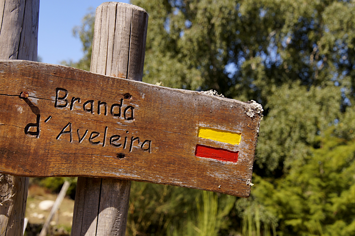 sign Branda d'Aveleira