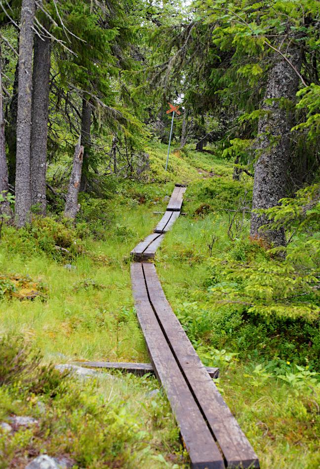 Hike Nipfjället